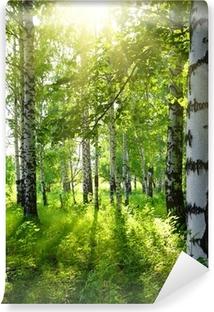 Papier Peint Vinyle Bois de bouleaux en été avec le soleil