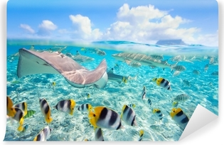 Papier peint vinyle Bora Bora sous-marine