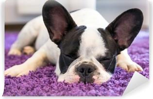 Papier peint vinyle Bouledogue français de dormir sur le tapis