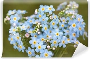 Papier peint vinyle Bouquet de forget-me-nots fleurs