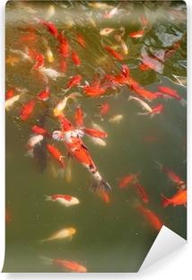 türbild, porte-Autocollants Türtapete Koi poissons dans un étang Papier Peint