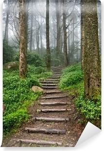 Papier peint vinyle Chemin forestier