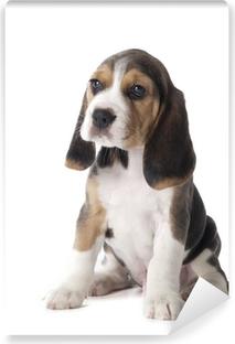 Papier peint vinyle Chiot beagle