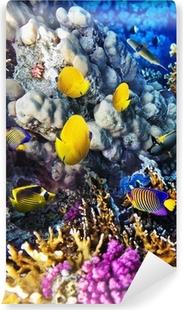 Papier peint vinyle Corail et poisson rouge dans le Sea.Egypt