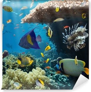 papiers peints poissons pixers nous vivons pour changer. Black Bedroom Furniture Sets. Home Design Ideas