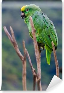 Papier peint vinyle Costa rica perroquet vert