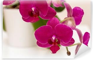 Papier peint vinyle Dark Pink Orchid Close Up