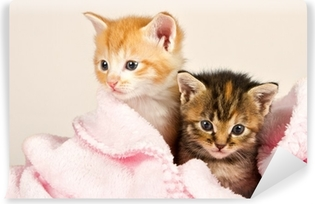 Papier peint vinyle Deux chatons dans une couverture rose