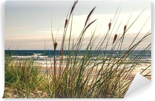 Papier peint vinyle Dune herbe dans la lumière du matin :)