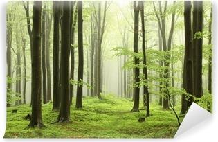 Papier peint vinyle Forêt de hêtres au printemps dans les montagnes