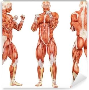 Papiers peints anatomique pixers nous vivons pour changer - Pose papier peint vinyle ...