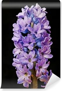Papier Peint Floral De Jacinthes Pixers Nous Vivons Pour Changer