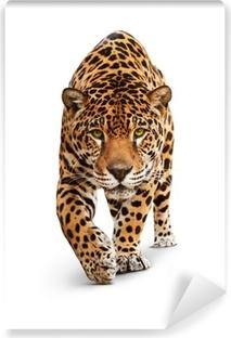 Papier Peint Vinyle Jaguar - vue de face animal, isolé sur blanc, ombre