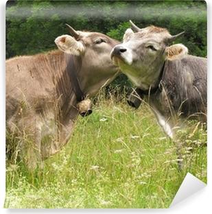 Papier peint lavable Bécoter Deux vaches