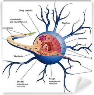 Papier peint lavable Cellules nerveuses