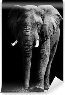 Papier peint lavable Elephant isolé sur fond noir