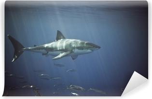 Papiers peints Requin blanc • Pixers® - Nous vivons pour changer