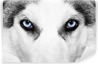 Papier peint black /& white huskie chien wall papier 300cm de large 240cm de hauteur WM267