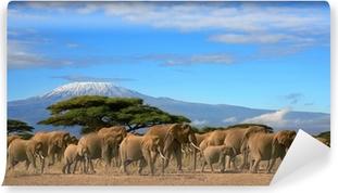 Papier peint lavable Kilimanjaro Avec Elephant Herd