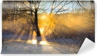 Papier peint lavable Les rayons du soleil filtrés par arbre nu