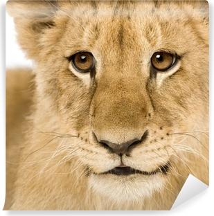 Papier peint lavable Lion Cub (4 mois)