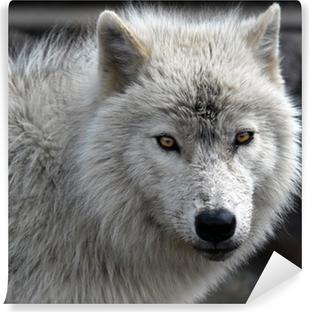 Papier peint lavable Loup arctique