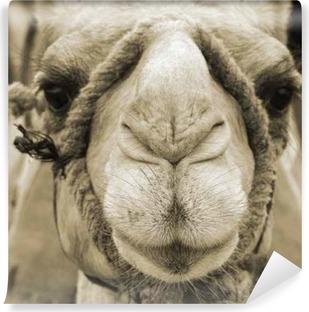 Papier peint lavable Visage de chameau