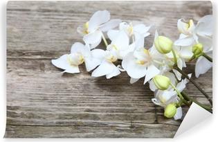 Papier peint lavable White orchid (Phalaenopsis)