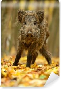 Papier peint vinyle Le cochon sauvage