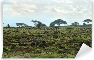 Papier peint vinyle Le paysage nature du Kenya. Kenya. Afrique.