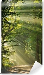 Papier peint vinyle Les rayons du soleil qui brille à travers les arbres dans une forêt.