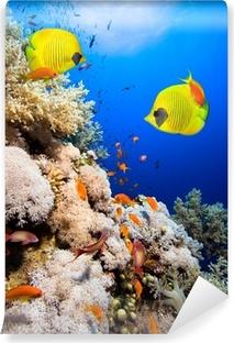 bb7733eb52 Papier peint autocollant Les récifs coralliens et les poissons papillons  masqués