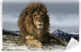 Papier peint vinyle Lion de Barbarie, Panthera leo leo