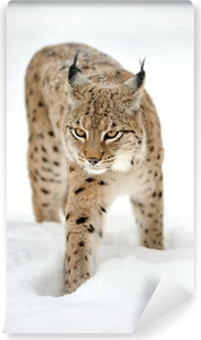 Papier peint vinyle Lynx en hiver