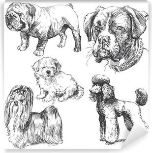 Papier peint vinyle Main tiré par des chiens