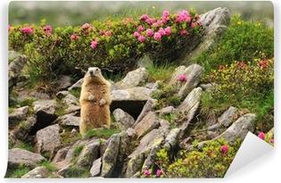 Papier peint vinyle Marmot entre les fleurs