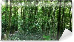 Papier peint vinyle Nuage forêt au Costa Rica
