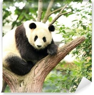 Papier peint vinyle Panda géant à la forêt