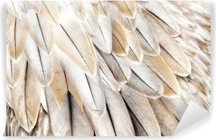Papier peint vinyle Plumes d'oiseaux