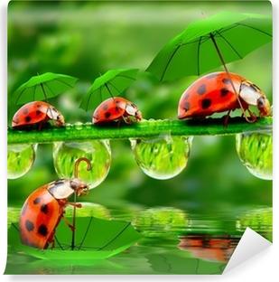 Papier peint vinyle Rainy day dans la nature. Petites coccinelles avec parapluie au-dessus étang.