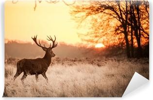 Papier peint vinyle Red Deer au soleil du matin.