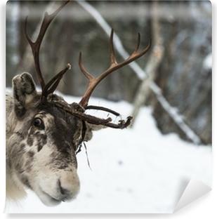 Papier peint vinyle Renne se tenant dans la neige