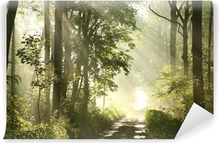 Papier peint vinyle Sentier de la forêt sur un matin brumeux de printemps après la pluie