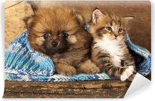 Papier peint vinyle Spitz chiot et chaton Maine Coon races, chat et chien