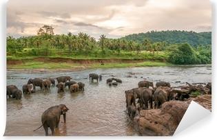 Papier peint vinyle Swimmong éléphants