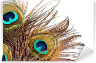 Papier peint vinyle Trois plumes de paon