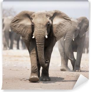 Papier peint vinyle Troupeau d'éléphants