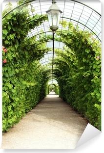 Papier peint vinyle Vigne arbre tunnel