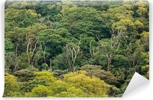 Papier peint vinyle Vue aérienne de la forêt tropicale canopée