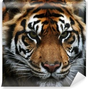 Papier peint vinyle Yeux tigre